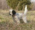 Owner:  Frank Arnau, Commerce, GA